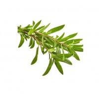 Thyme Organik 50gr